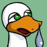 duckofindeed image